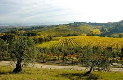 Una excursión a la región de Chianti